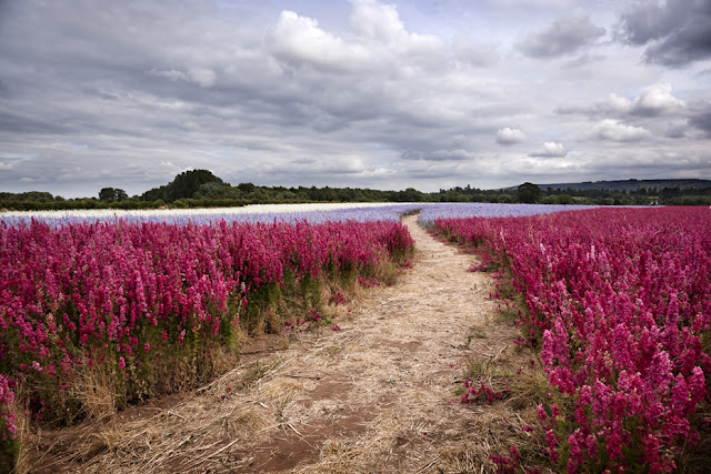 Field full of brightly coloured flowers under a cloudy sky www.martynferryphotography.com