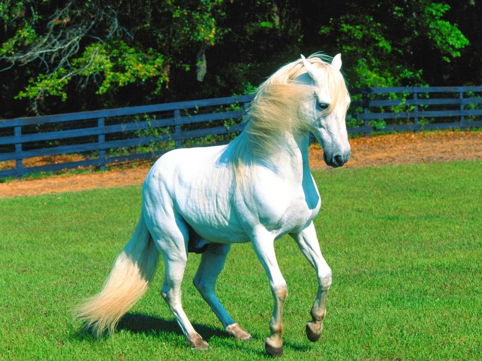 Popular   Wallpaper Horse High Definition - 4  Trends_866480.jpg