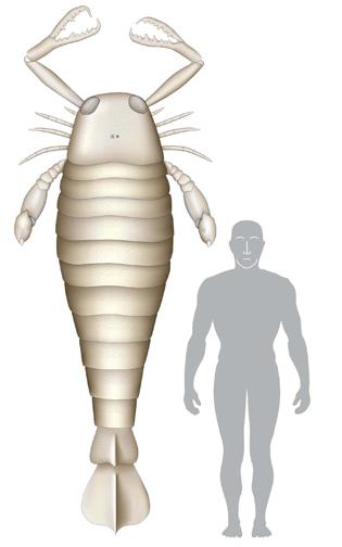 insetto gigante Jaekelopterus
