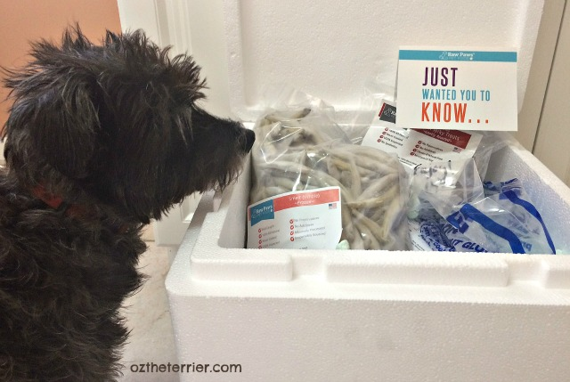 Oz the Terrier with recent purchase from Raw Paws Pet Food - raw smelt