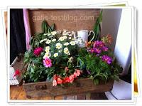 Blumenkoffer