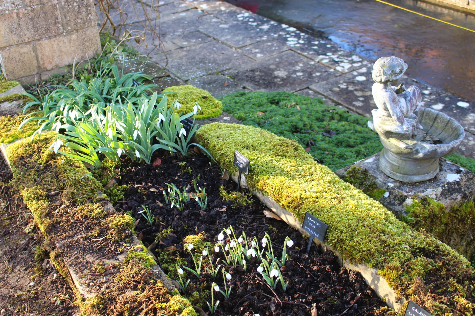 Photo showing the labelled raised display of snowdrops at Colesbourne Park