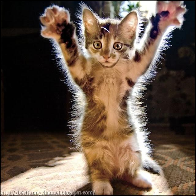 Funny kitty.