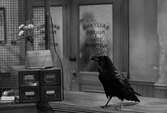 Jimmy the Raven