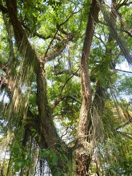 Instituto Árvore da Vida - IAV