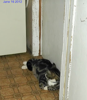 tabby cat beside door