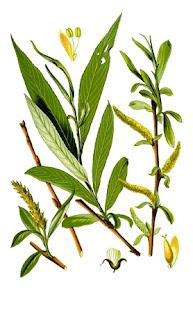 Plante bune pentru oase