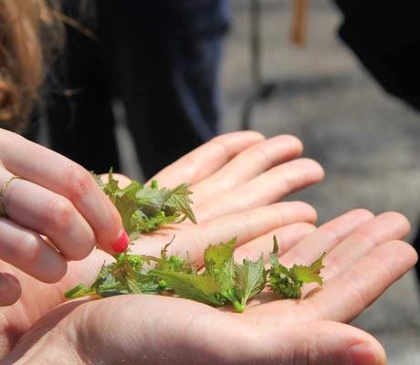 foraging brooklyn ny