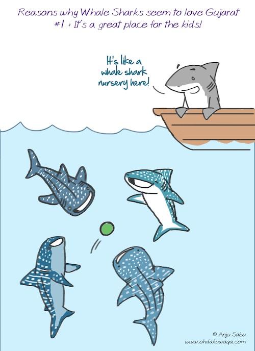 baby hammerhead sharks
