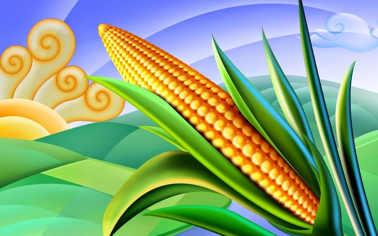 gambar jagung
