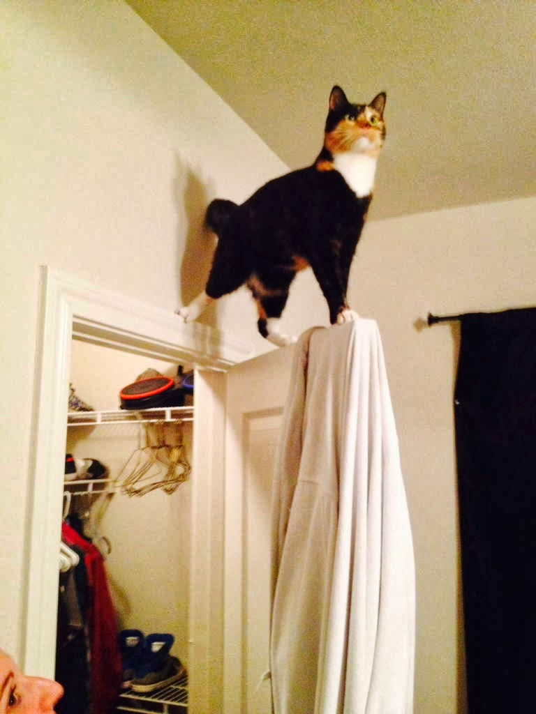 Funny cats - part 81 (40 pics + 10 gifs), cat pics, cat stands on door