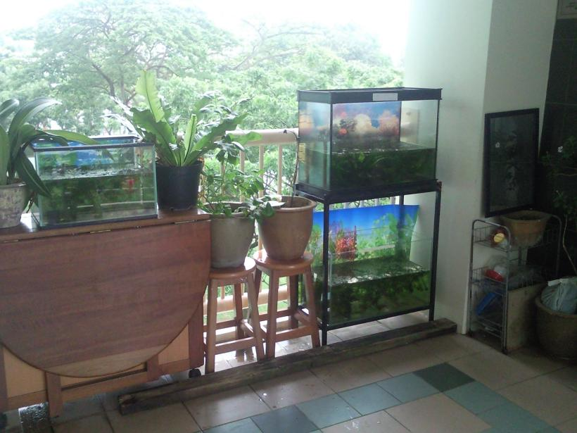 A day in sg fishy idea for an outdoor aquarium to house for Outside fish tank