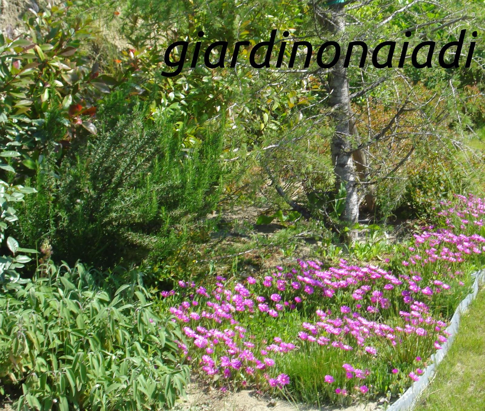 Il giardino delle naiadi lo stile il giardino di campagna for Cespugli fioriti da giardino