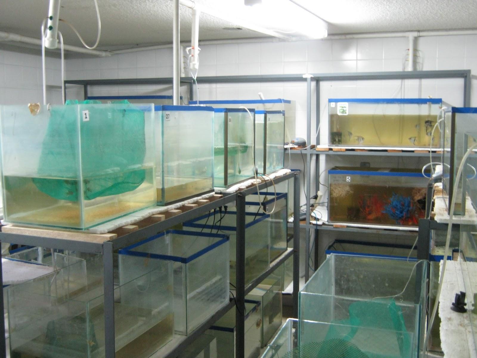 Salida tecnica a pasto nari o colombia recursos for Cria de peces ornamentales