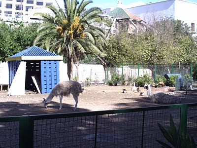 صور حديقة الطيور 17