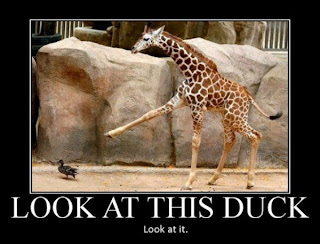 funny giraffe and duck look at this duck, just fucking look at it