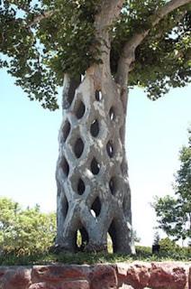 7 Pohon Terunik Di Dunia