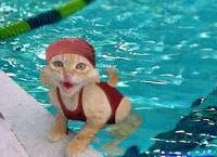 pisica in apa