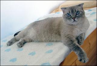 blog d'un chat