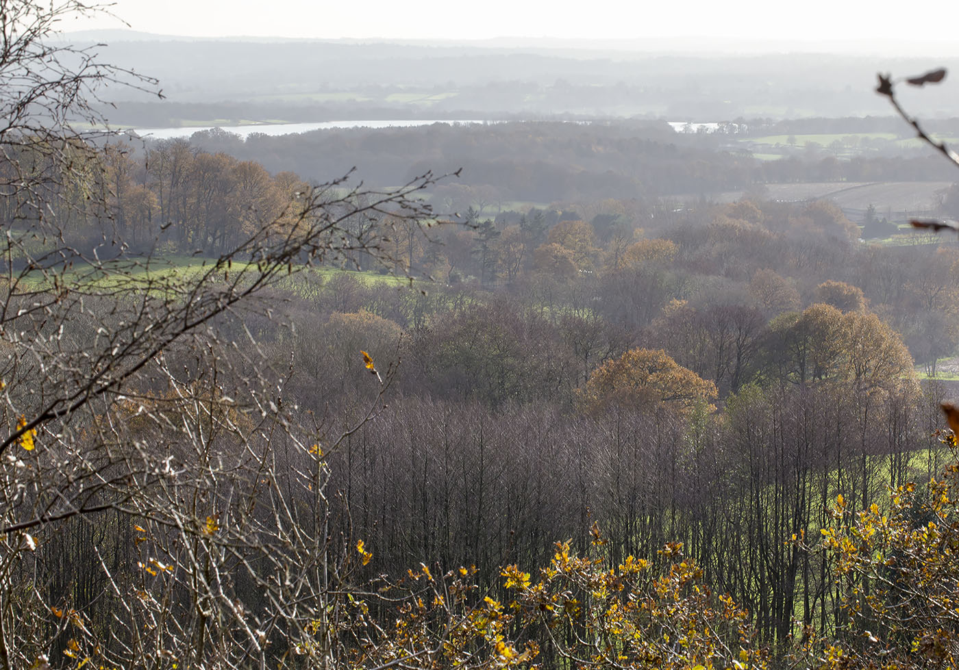 View from the edge of the wood over the Weald.  Toy's Hill, 7 December 2013.