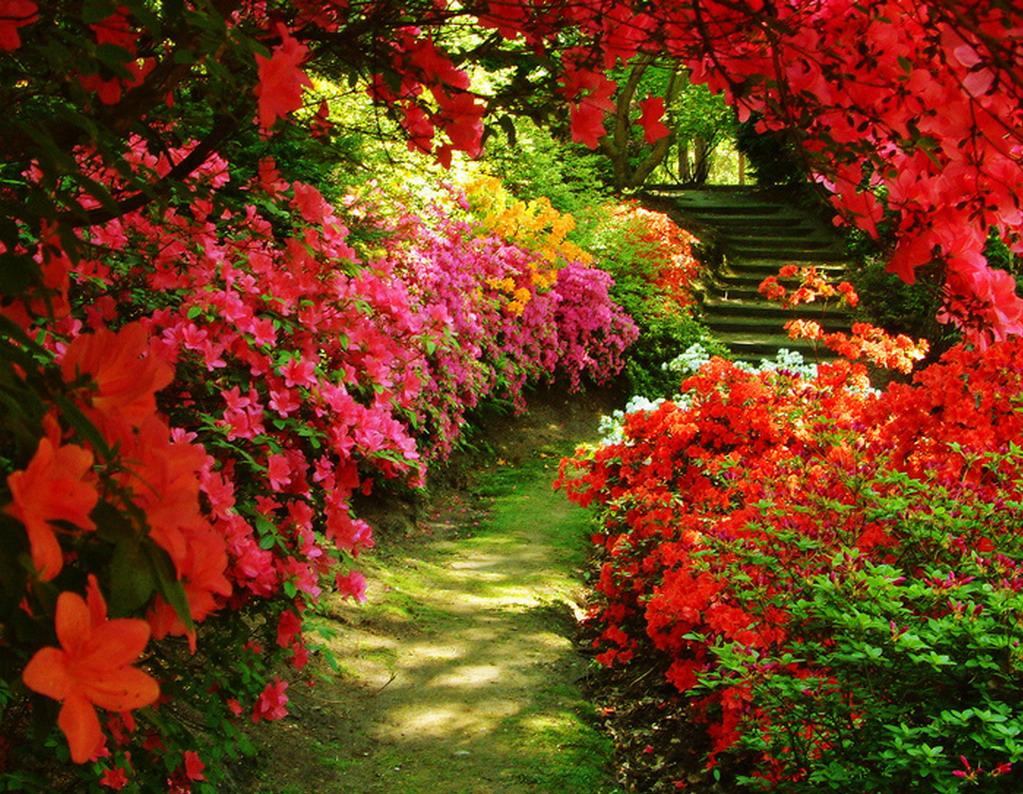 Resultado de imagem para jardim sempre florido
