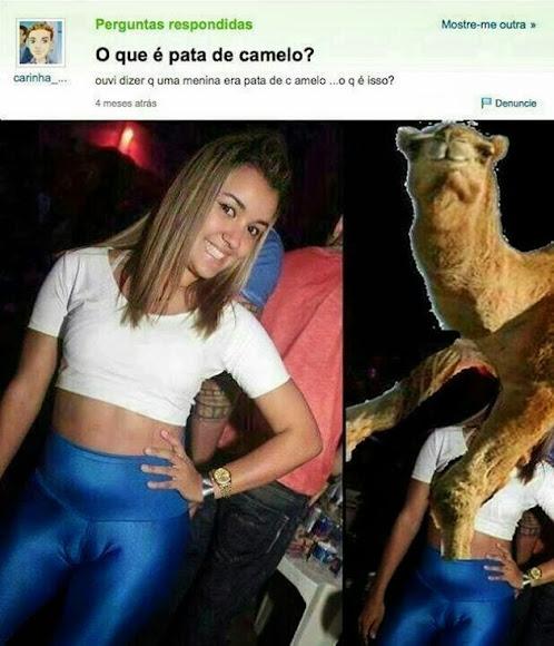 Pata de camelo