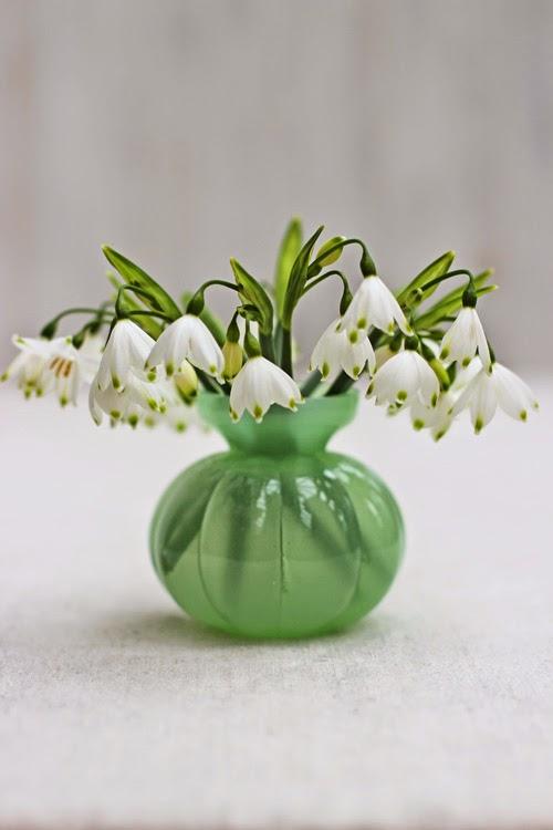 Spring Snowflake-Leucojum
