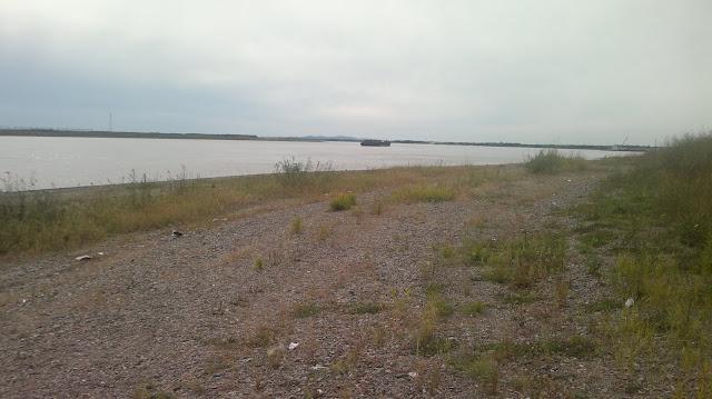 Пляж Амура зарос травой