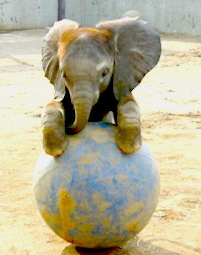Funny Baby Elephants