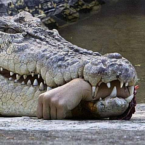 Crocodile World Blogger The Simple Ways To Avoid