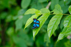 UNIDENTIFIED BUTTERLY