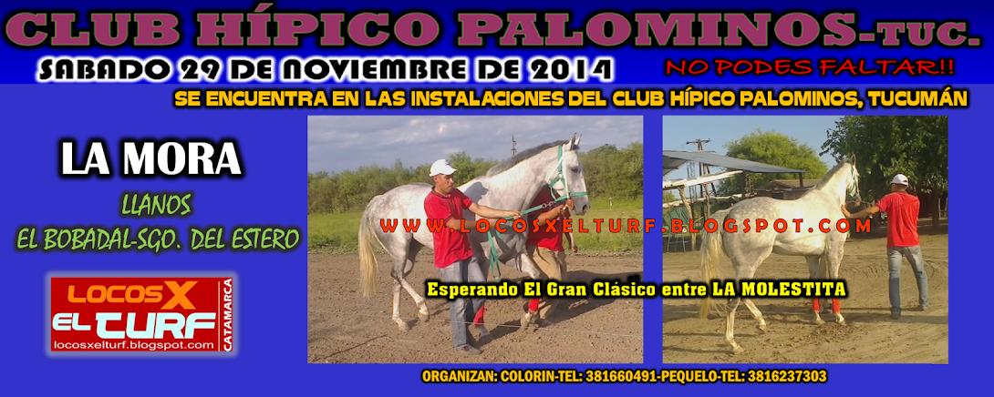 29-11-14-PALOMINOS-LA MORA