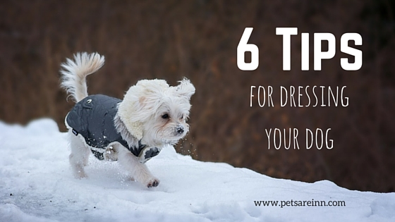 Dog Clothing Tips