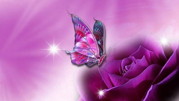 Butterfly in Rose HD Wallpaper