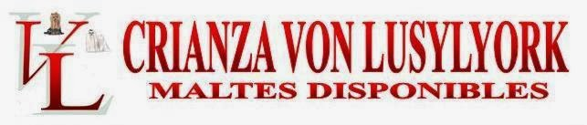 ♥CRIANZA VON LUSYLYORK MALTES DISPONIBLES♥