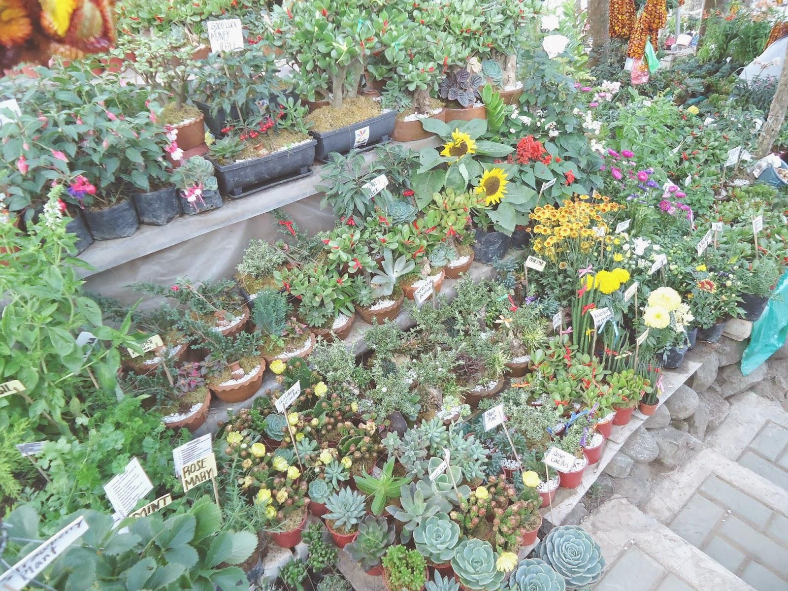 Hjamnette Likes Baguio City Succulents