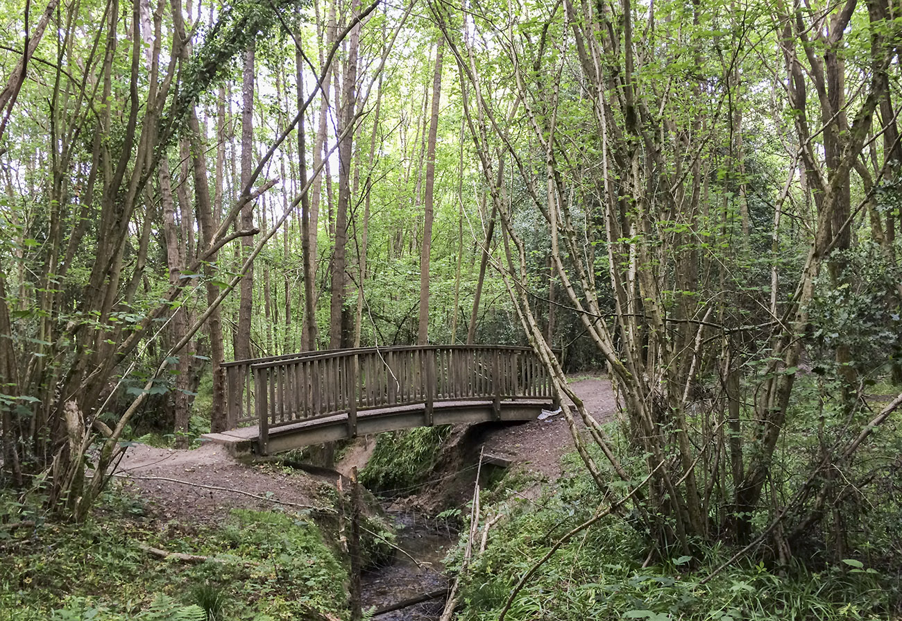 Bridge in the woods behind Queen Victoria Hospital, near East Grinstead.  21 May 2014.