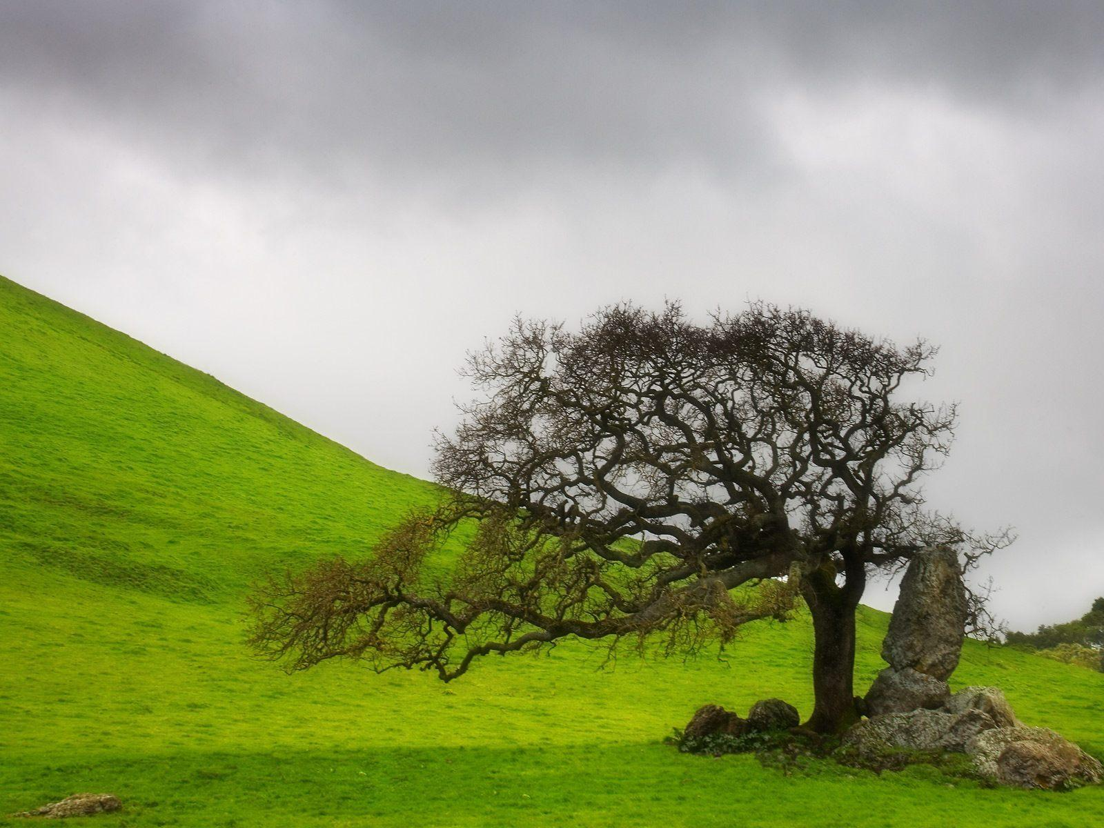 27 Lonely <b>Tree</b> Pictures