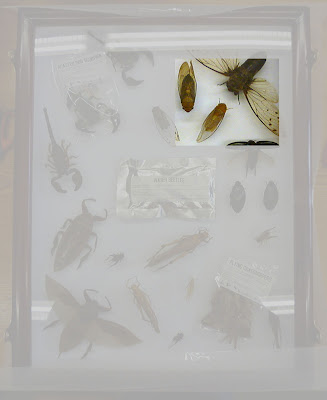edible insects, entomology, entomophagy, displays, OUMNH, town trail