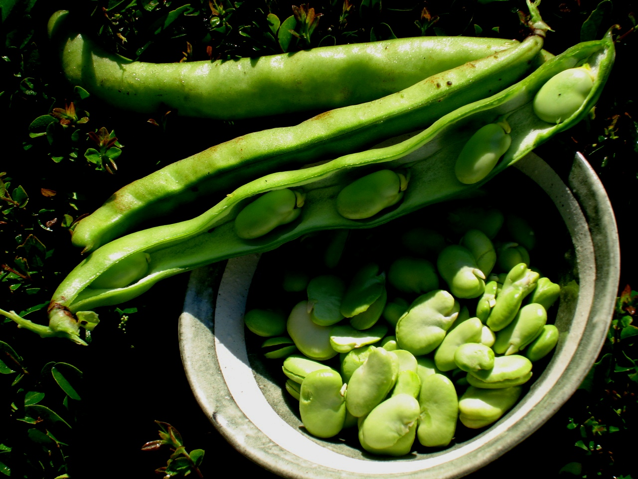 how to grow green beans in south africa