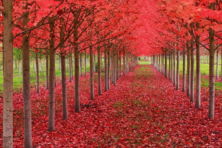 تحكي جمال وروعة الخريف autumn2.jpg