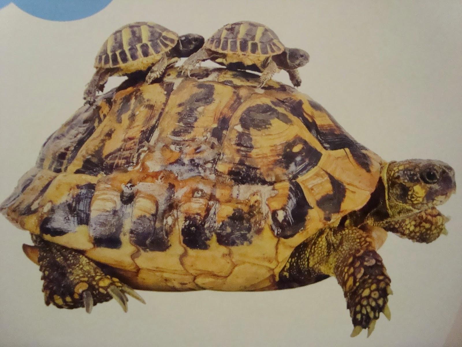 encyklopedia zwierząt dla dzieci, jak wygląda anakonda, książka, dla dzieci, o zwierzętach