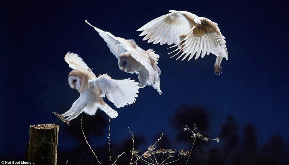 Gambar-gambar gerakan 'split-second' yang menakjubkan