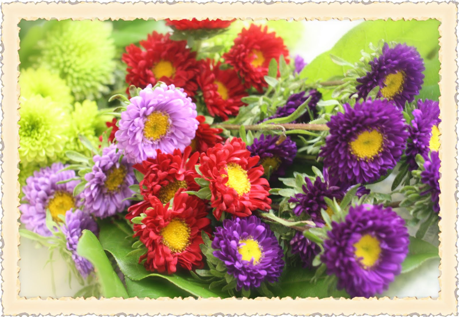 Rose Vignettes: Fresh-Cut Friday #13 Flower of the Month...Asters