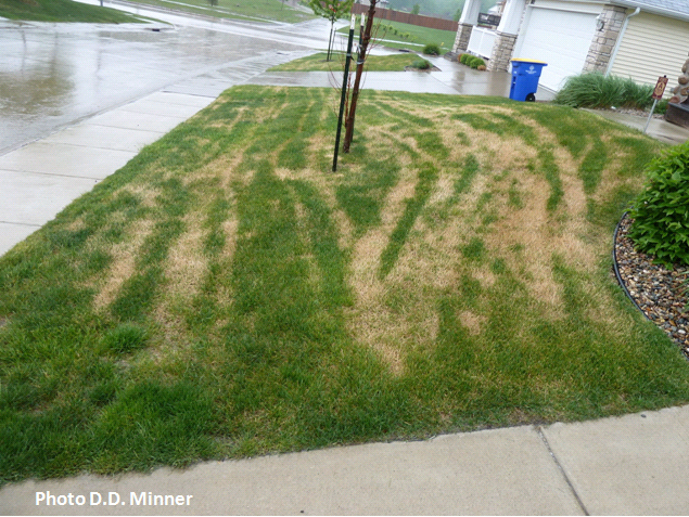 Image Result For Reseeding Lawns