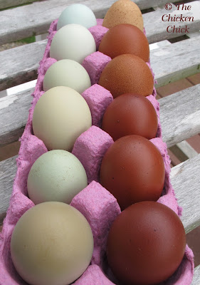 Eggs that will not be incubated immediately after collection should be carefully handled and stored properly. Clean hatching eggs should be gently and infrequently handled with clean hands and should never be washed. The embryo relies on its outermost layer, called the bloom or cuticle, to protect it from bacteria; washing the egg removes the bloom, making the embryo susceptible to spoilage and risks contaminating other eggs during incubation.
