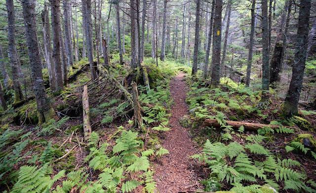 Castle Ravine Trail