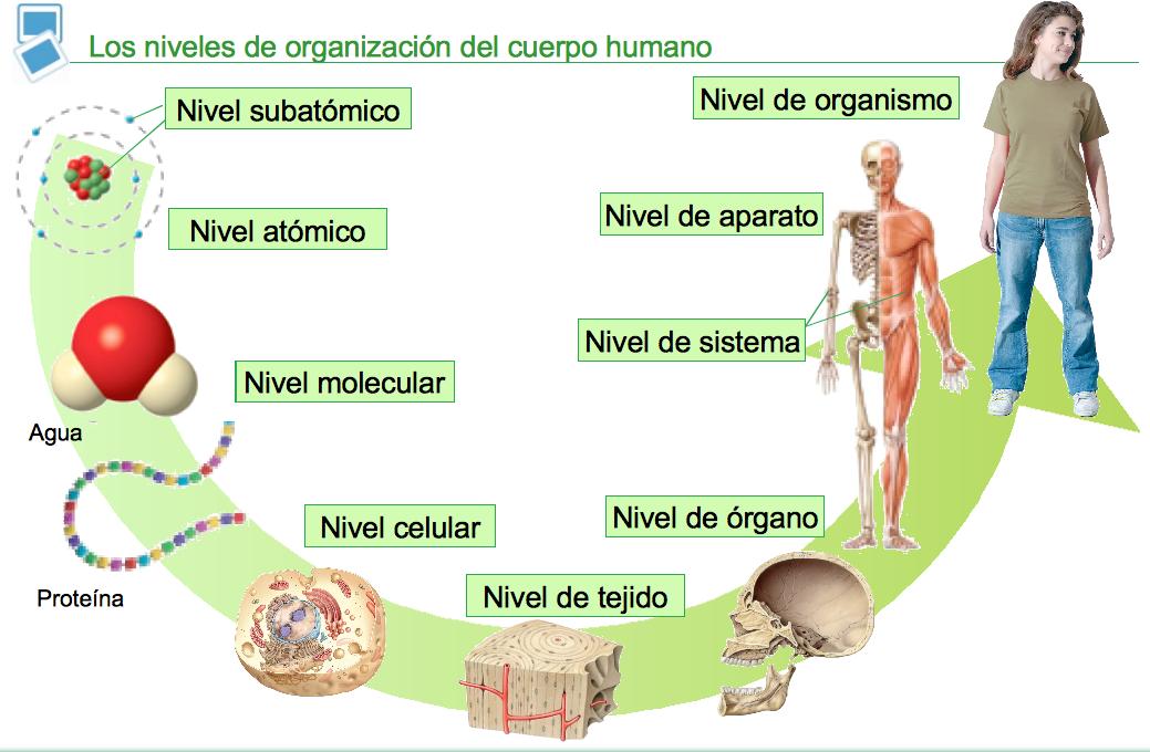 Curso: Anatomía Aplicada