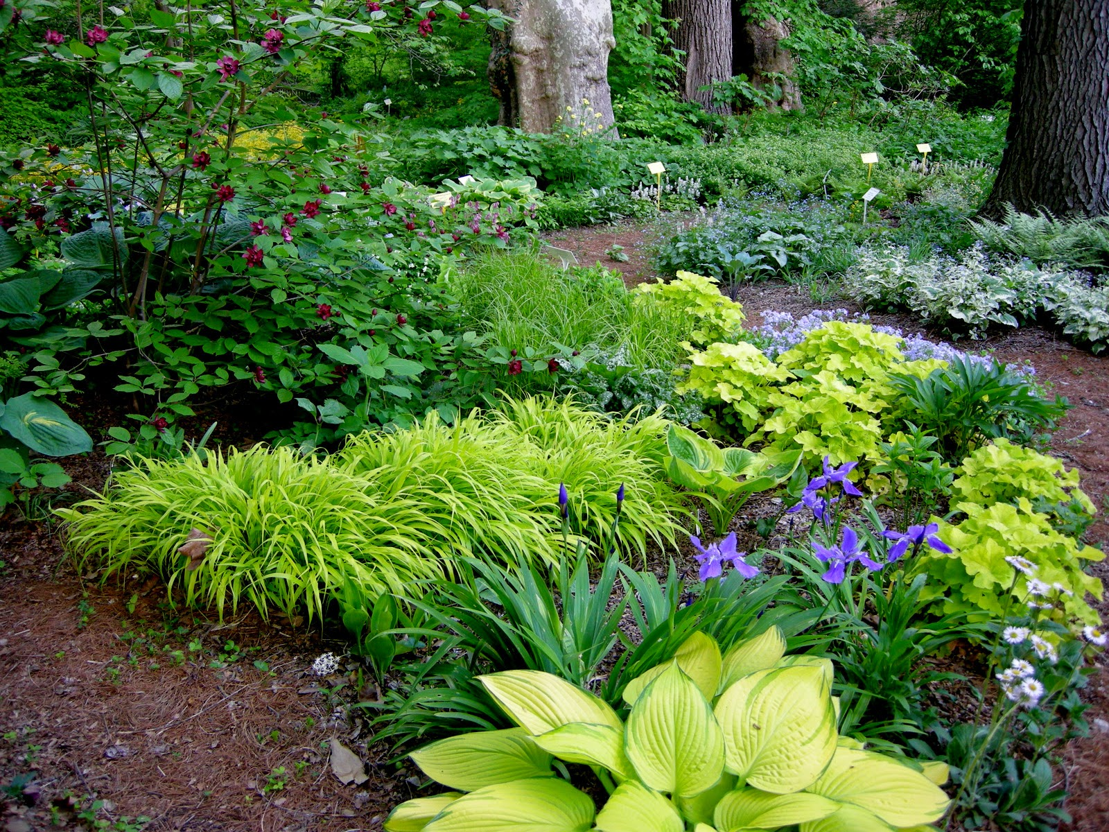 Cultivate create spring dreaming for Rock garden designs shade