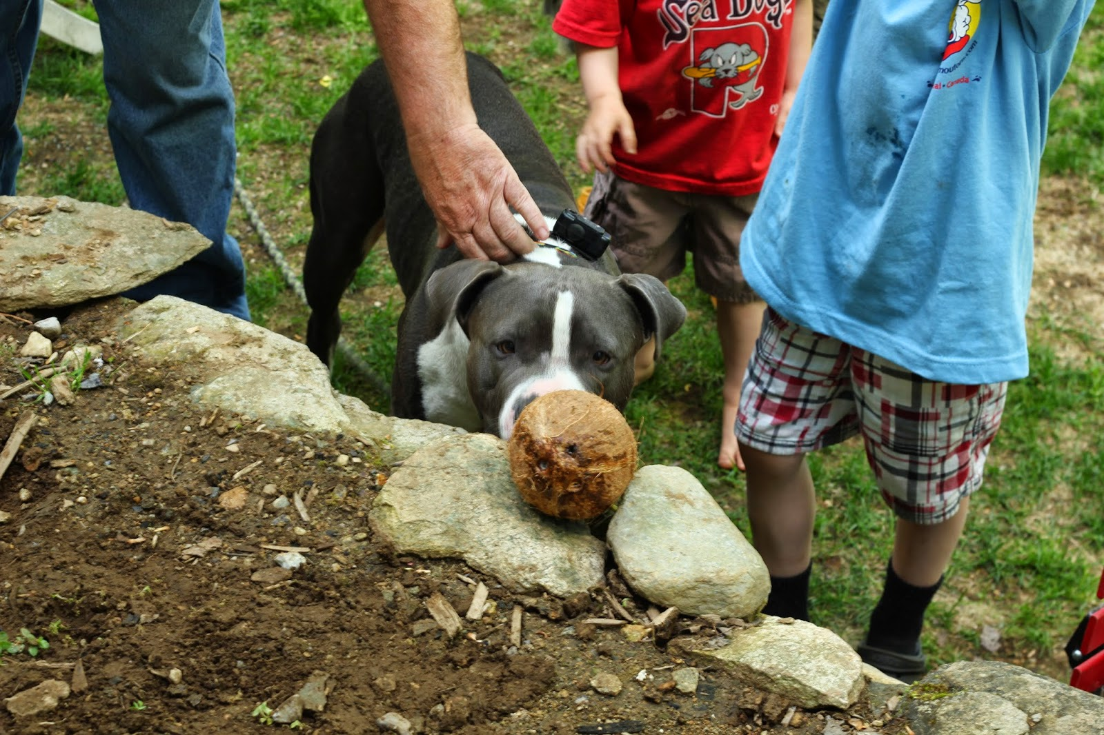 Sportdog Dog Training Collar Cheapest Uk